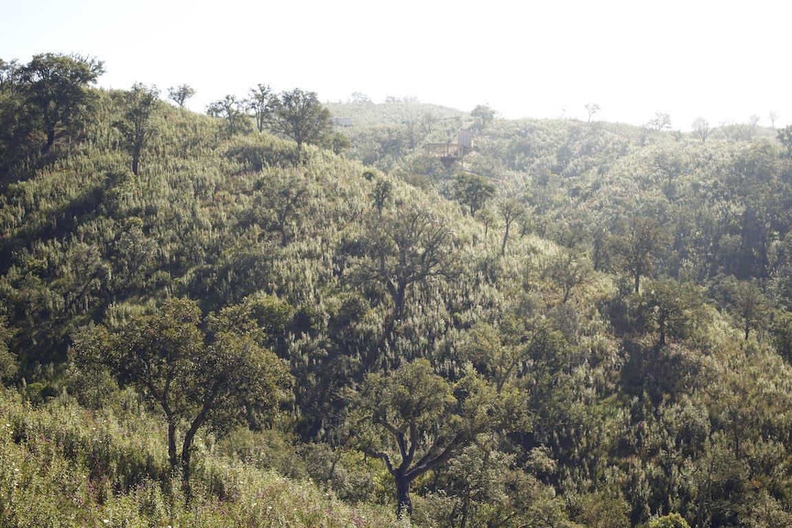 schöne Landschaft, Permakultur Projekt, Selbstversorgung, Wiederaufforstung, Naturfreunde, Urlaub in der Natur, Alentejo, Portugal