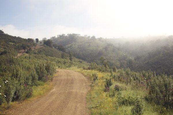 Weg zu Monte Forca, unberührte Natur, Lavendel- und Zistrosenblüten, Korkeichen, Permakultur Farm, Alentejo, Portugal