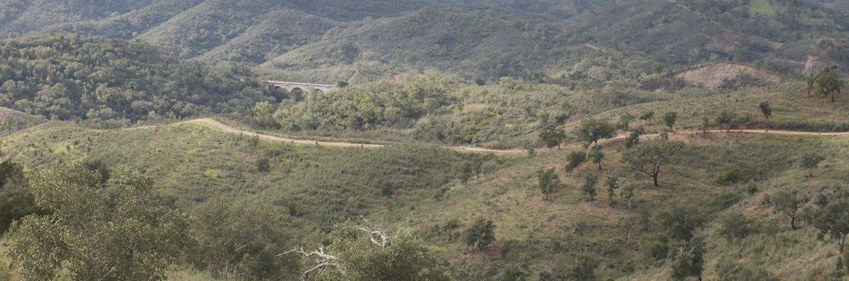 Testfläche Wiederbewaldung, Aufforstung